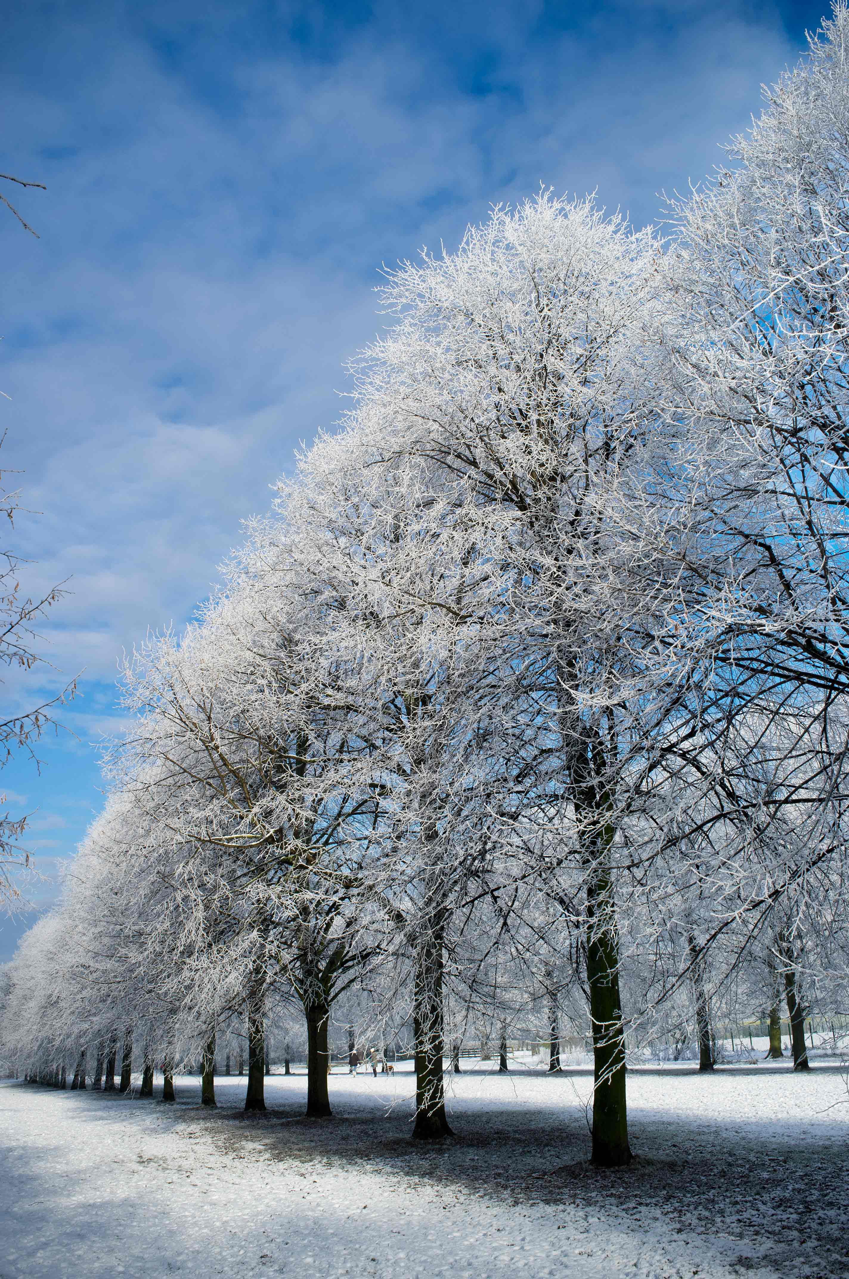 Displaying 12> Images For - Winter Trees...
